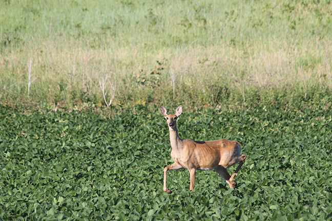 At Odds on CWD in the Whitetail World