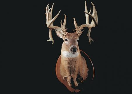 //www.bowhuntingmag.com/files/32-trophy-bucks-over-200-inches/douglassiebert39253.jpg