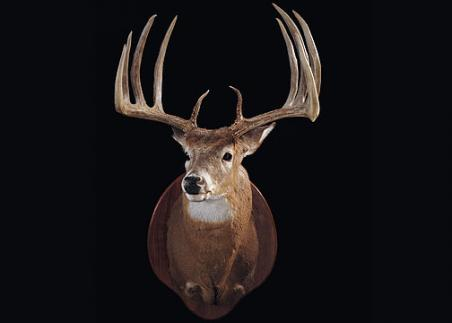 //www.bowhuntingmag.com/files/32-trophy-bucks-over-200-inches/kentpetry00708.jpg