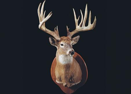 //www.bowhuntingmag.com/files/32-trophy-bucks-over-200-inches/kevinpetterson39254.jpg
