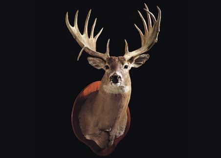 //www.bowhuntingmag.com/files/32-trophy-bucks-over-200-inches/lamontestark04104.jpg