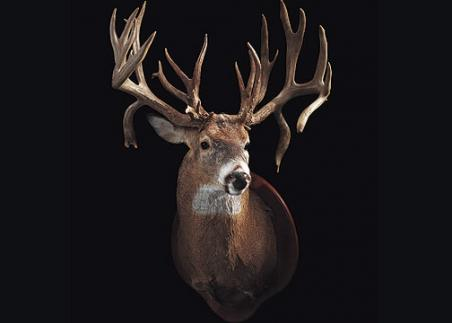 //www.bowhuntingmag.com/files/32-trophy-bucks-over-200-inches/larryraveling00712.jpg