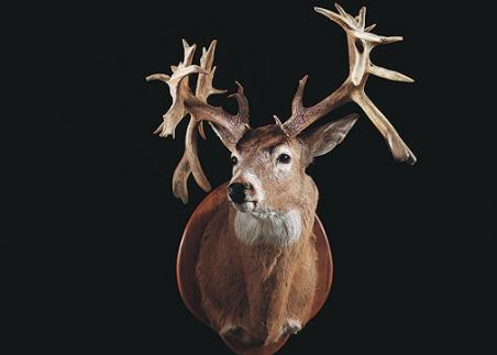 //www.bowhuntingmag.com/files/32-trophy-bucks-over-200-inches/ronnieosborne39165.jpg