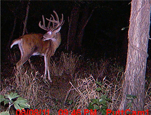 //www.bowhuntingmag.com/files/pros-and-cons-of-summer-trail-cameras/02_trailcamera_061212.jpg