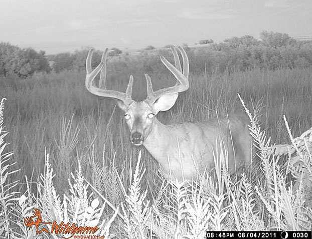 //www.bowhuntingmag.com/files/pros-and-cons-of-summer-trail-cameras/03_trailcamera_061212.jpg