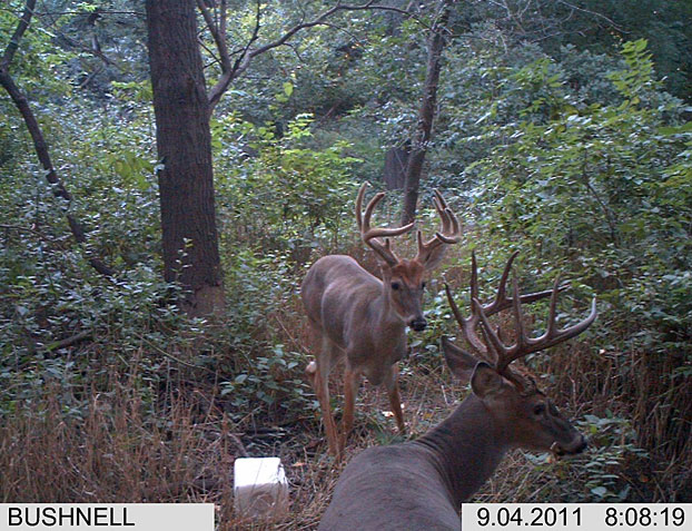 //www.bowhuntingmag.com/files/pros-and-cons-of-summer-trail-cameras/04_trailcamera_061212.jpg