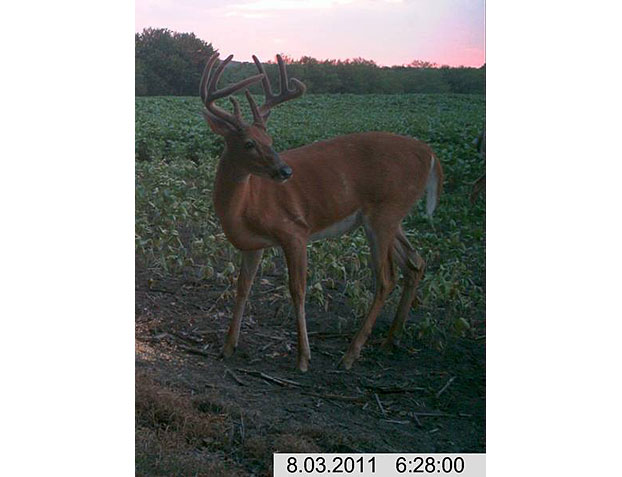 //www.bowhuntingmag.com/files/pros-and-cons-of-summer-trail-cameras/05_trailcamera_061212.jpg