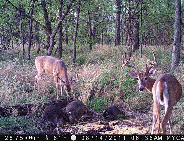 //www.bowhuntingmag.com/files/pros-and-cons-of-summer-trail-cameras/06_trailcamera_061212.jpg