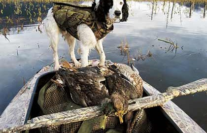 "An Alaskan Hunter Finds His ""Once In A Lifetime"" Dog."