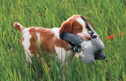 Introducing your pup to birds before you begin obedience training can prevent future problems.