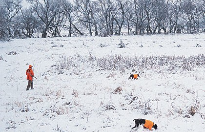 1. When hunting in snow, outfit any gun dog with a blaze-orange vest...