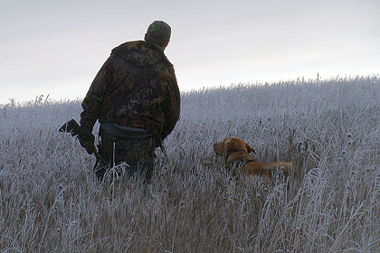 Keep Your Hunting Dog In Shape
