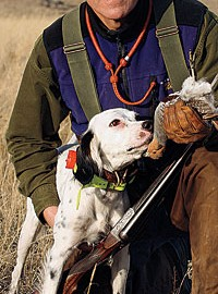 By Dave Duffey    By utilizing a beeper collar's feedback, human hunters can become