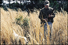 Quail hunting was once the sport of the common man.