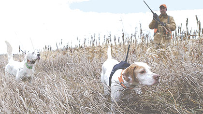 Using GPS Technology To Keep Track Of Our Hunting Dogs