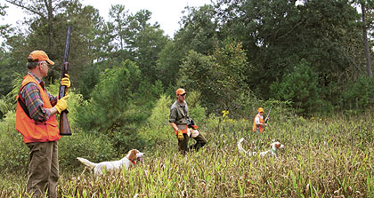 A classic hunting experience in the southern pine woods