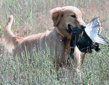 Image Via Gun Dog Mag