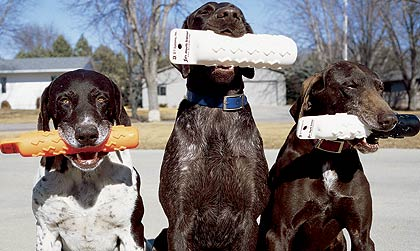 Modern Retrieving Tools For Training Gun Dogs