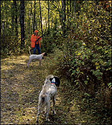 Ruffed grouse lessons in Wisconsin's North Woods