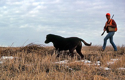 Follow this practical advice from professional gun dog trainers and experienced hunters!