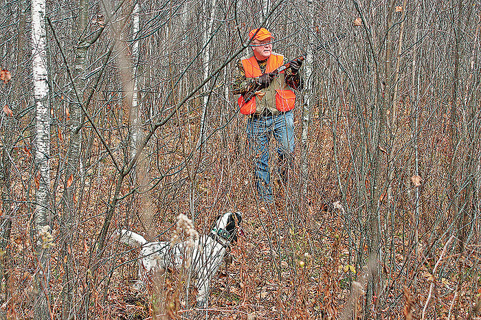 Hunting Multiple Dogs: Delight or Disaster?