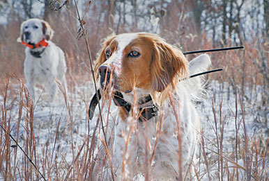 Remote-training technology: a boon for your toolbox. Here are our 2011 Gun Dog e-collar reviews.