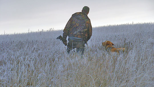 Your Four-Season Plan For Keeping Your Dog In Hunting Shape