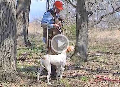 VIDEO: Teaching Your Gun Dog
