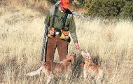 Watering your dogs frequently during warm-weather hunts is essential.