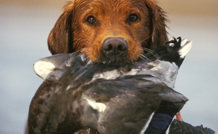 A Utah hunter's dog went from man's best friend to his worst enemy Sunday.  According to KSL TV,