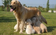 Dog and pups