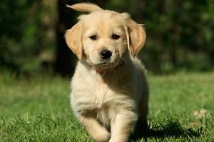 Puppy in a garden