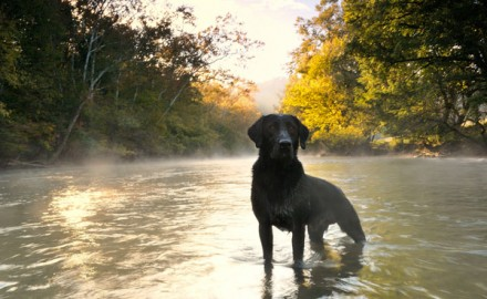 A lot of great photos come across our desks here at Gun Dog, and our special Labradors edition was