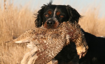 If your little dog can find that goose, you can keep the bird,