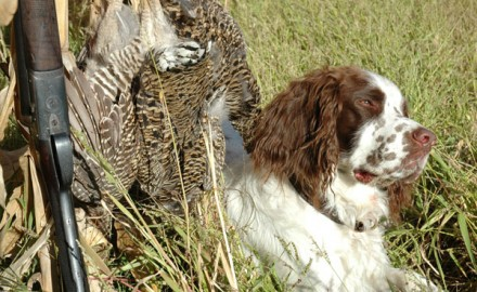 Pointing dogs are the most common choice for hunting prairie grouse. They can simply cover the most