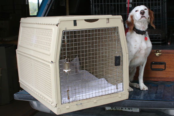 Well known Truck Etiquette: How to Keep Your Dog Safe in the Truck - Gun Dog  IX76