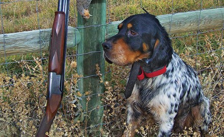 For one Minnesota grouse hunter, an enjoyable afternoon in the field didn't exactly turn out as