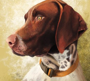I've seen German shorthaired pointers all over the world,