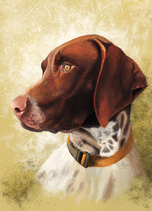 Breed Profile: German Shorthaired Pointer