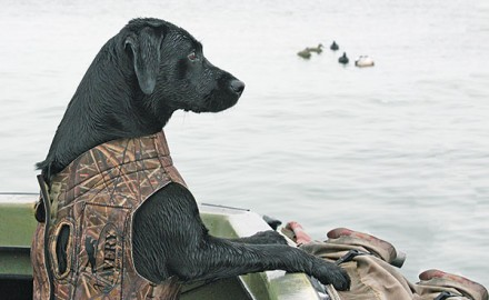 How well your retriever behaves in a boat—especially a small one—is more than a question of
