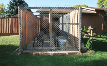 Building The Perfect Dog Kennel