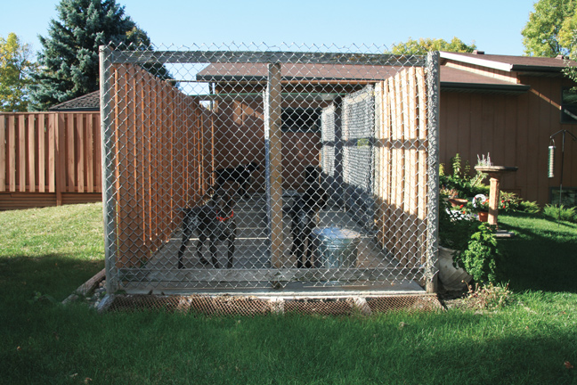 How to build the perfect dog kennel gun dog magazine for How to build a nice dog house