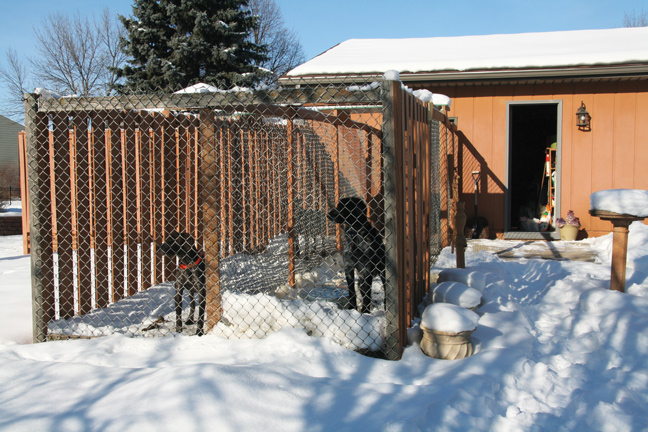 ... Dog Kennel Building Tips
