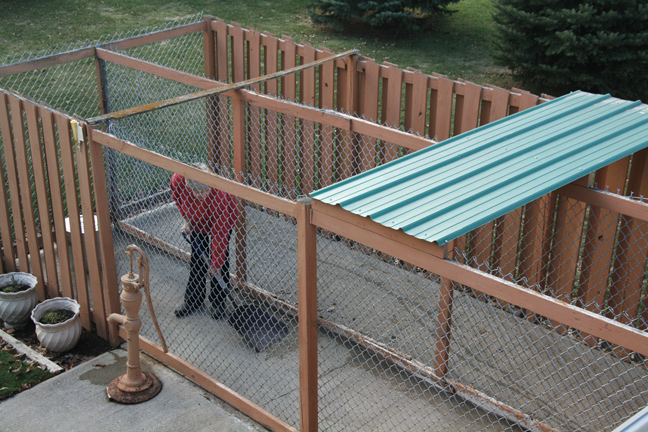 Pleasing How To Build The Perfect Dog Kennel Interior Design Ideas Grebswwsoteloinfo
