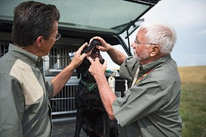 First Aid Tips for Your Gun Dog