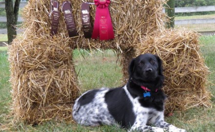 Of all the things you'll see there, gun dogs are the No. 1 attraction at the Pheasants Forever