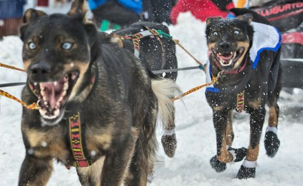 At the 2014 Iditarod, the bond between a man and his dog runs deep. It's about more than stick