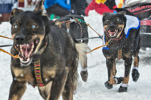 Amazing Dog Photos from the 2014 Iditarod
