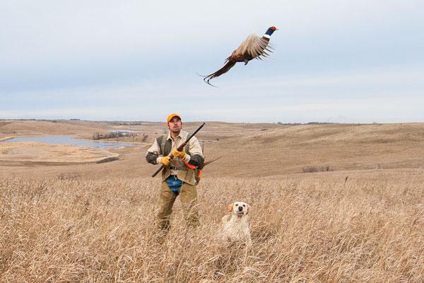 Gun dog 39 s 2014 quail pheasant forecast gun dog magazine for Arkansas game and fish forecast