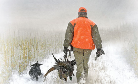 Pheasant and quail populations fluctuate dramatically in response to weather, and the most